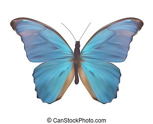 Blue Butterfly Isolated on White Realistic Vector Illustration