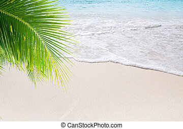 summer beach - View of nice tropical beach with some palms
