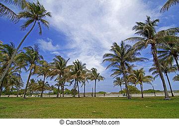South beach - Palm trees at Miami south beach, Florida