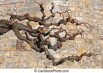 Dead Tree Branches in Front of Stone Wall