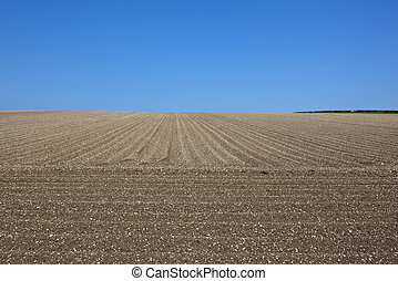 potato rows - lines and patterns of a chalky yorkshire wolds...