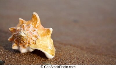 Conch shell on beach - Conch shell on the sand beach