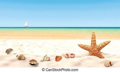 Shells on a sandy beach - Shells and starfish on a sandy...
