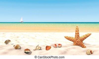Shells on a sandy beach