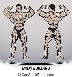 Bodybuilder. Position the front and rear.