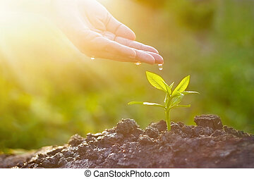 Hand nurturing and watering young plant on sunshine nature...