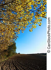 Autumn poplar tree - Fall landscape with golden poplar tree...