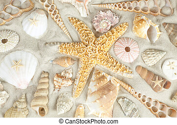 Starfish and seashells - Assorted seashells on a sandy beach...