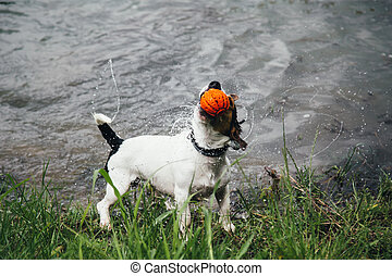 dog with a ball in his mouth shakes off water