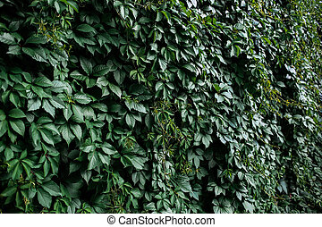 Natural green leaf wall, eco friendly background