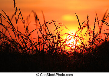 Sun set looking through tall grass