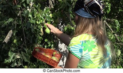 Female villager woman with headscarf picking pears to heart...