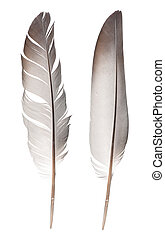 feathers isolated on white background