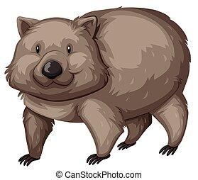 Wild wombat on white background illustration