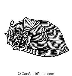 black sea cockleshell. - Black sea cockleshell. Hand Drawn...