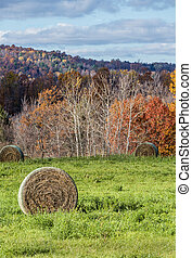 Autumn Hayfield - Large Round Bales in Field with Autumn...