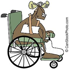 Injured moose in a wheelchair