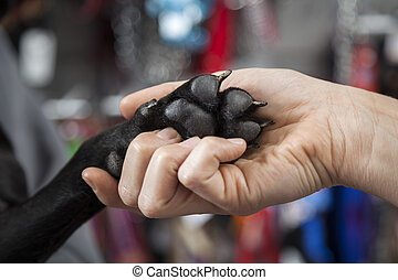 Womans Hand Holding French Bulldogs Paw - Closeup of womans...