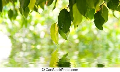 green leaves background in sunny day, shallow focus