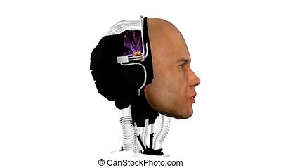 android, cybernetic intelligence machine - robot