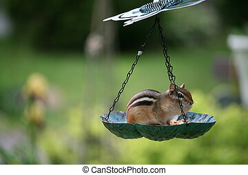 birdfeeder - isolated  bird feeder