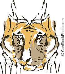 Tiger on white background - Tigre rosto animais selvagens...