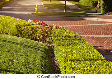 trimmed bush, green fencing in the park.