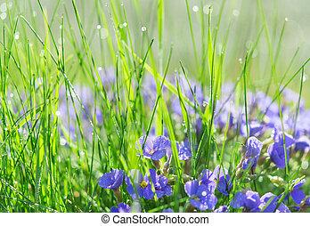 Backlit droplets morning dew on summer sunlit glade -...