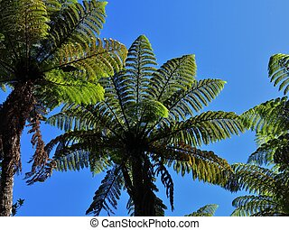 Fern trees growing in New Zealand - Scene in the Abel Tasman...