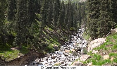 4K video of rapid stream in mountain fir tree forest....