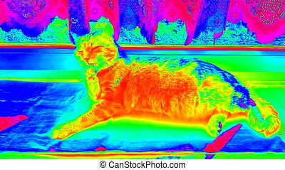 Washing relaxing infrared cat