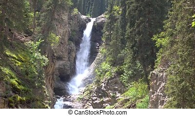 4K video of high waterfall in mountain spruce forest....