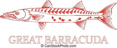 Barracuda Fish. - Outline of a Barracuda Fish.