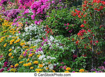Colorful decorated flower garden - Colorful ornamental...
