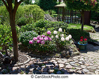 Flowers corne island in a garden - Blooming flowers and...