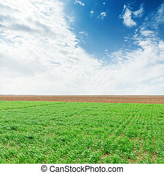 green agriculture field and blue sky with clouds over it