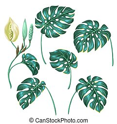 Stylized monstera leaves Decorative image of tropical...