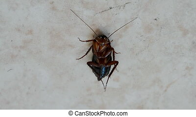 cockroach after disinfection - cockroach on the floor under...