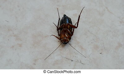 cockroach, insect disinfection - cockroach on the floor...