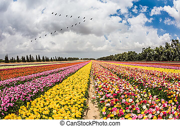 Over the field flying migratory birds - Spring flowering...