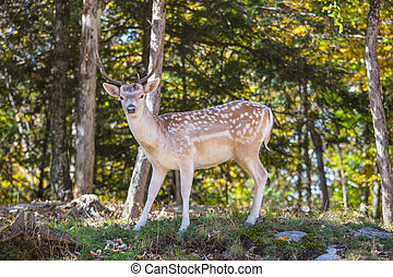 Spotty deer on forest glade - Charming spotty deer on a...