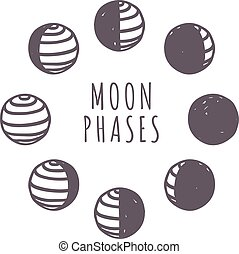 Moon phases vector set - Moon phases moonlight dark new...