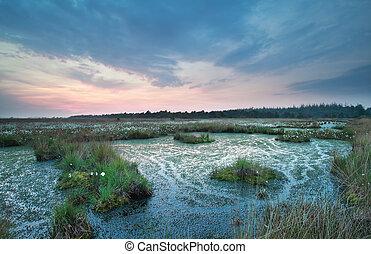 swamp at summer sunset, Drenthe, Netherlands