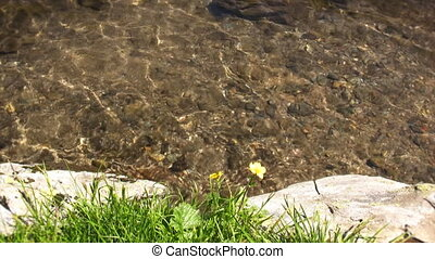 Clear water and flowers