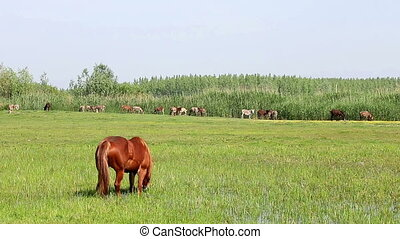 horse grazing on green field