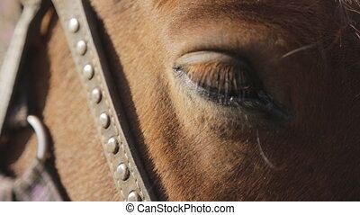 The brown horse with settled eye, harness and bridle made of...