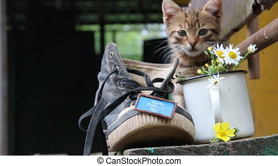 One shoe, inscription Happy Mothers Day and a cute kitten -...