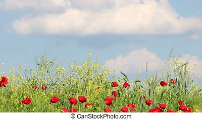 Wildflowers and blue sky with clouds