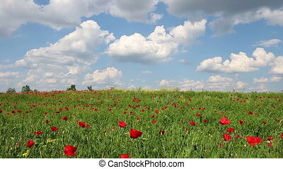 Wildflowers and blue sky with clouds landscape