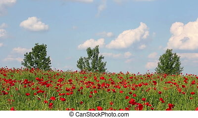 poppies flower and trees landscape